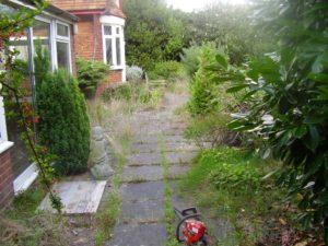 Overgrown-patio