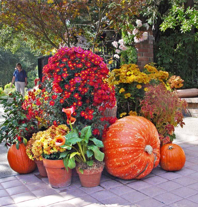 Fall Landscaping Tips garden design: garden design with fall landscaping tips uamp ideas